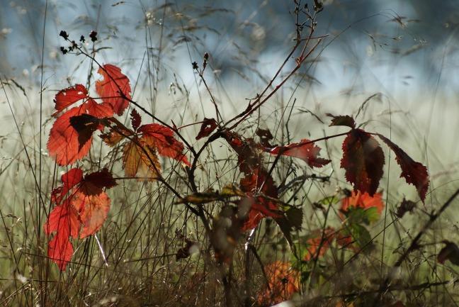 autumn-205588