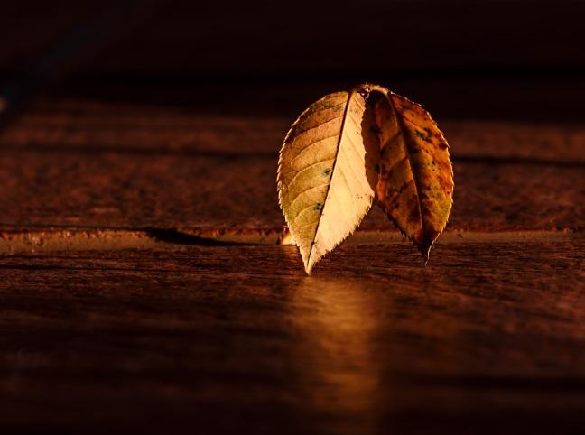 leaf-409258